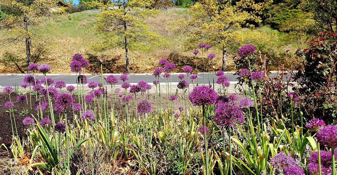 Name:  Garden.jpg Views: 3516 Size:  588.1 KB