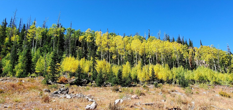 Name:  Cedar Breaks NP (5).jpg Views: 9411 Size:  735.6 KB